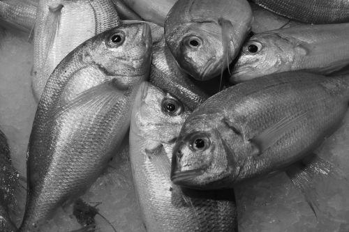 fish seafood food
