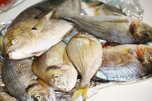 fish sea bream provence