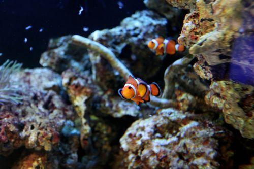 fish water animal world