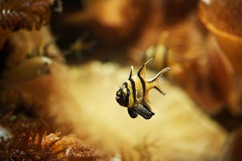 fish aquarium meeresbewohner