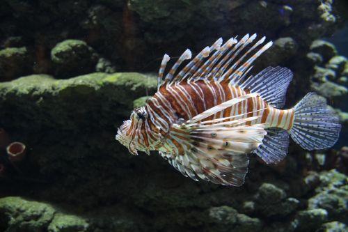 fish sea water