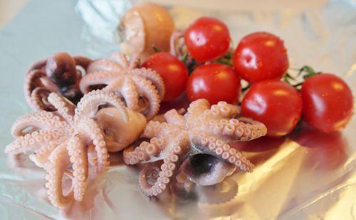 fish squid octopus