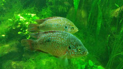 fish aquarium animal