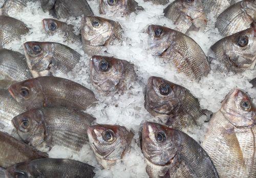 fish sea bream fish market
