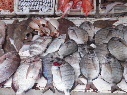 fish fishes harbor