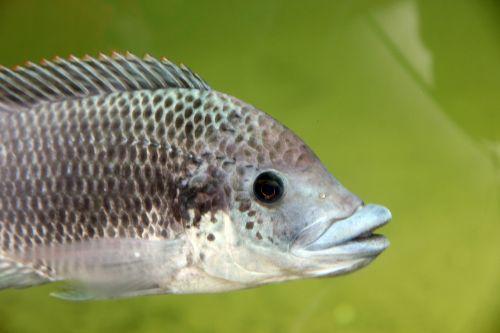 fish water blijdorp