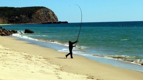 fish sea fishing