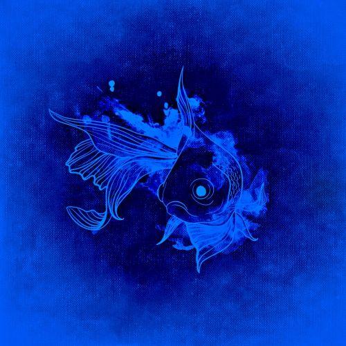 fish underwater world underwater