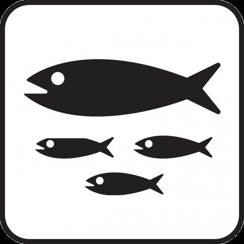 fish school of fish schooling