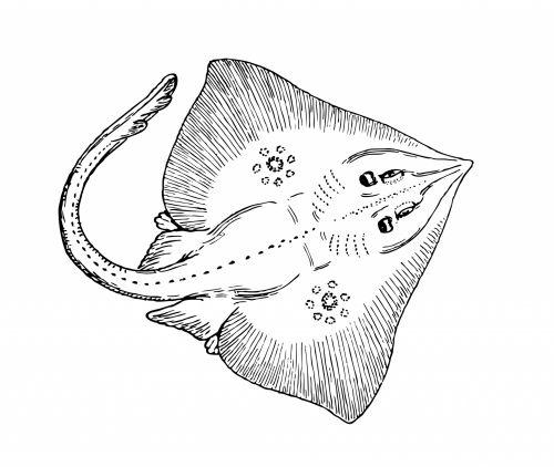 Fish Clipart Illustration