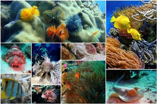 fish collage photo collage underwater