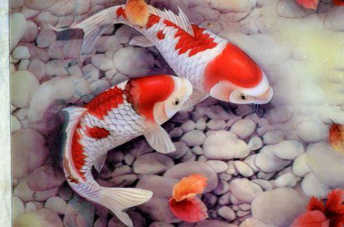 Fish Illustration (c)