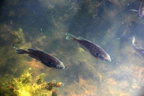 Fish In Lake 1