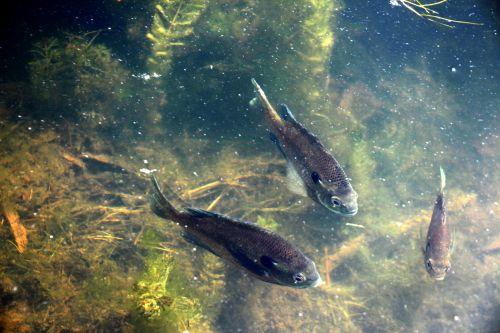 Fish In Lake 2