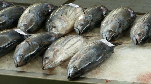 fish market fischtheka fish