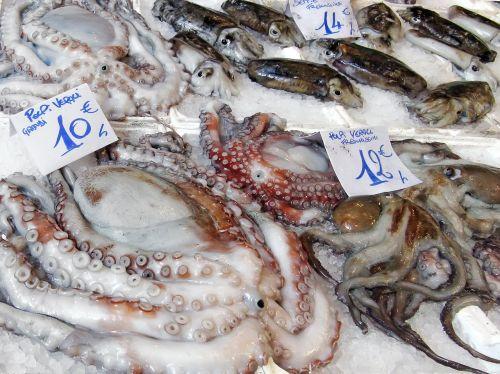 fish market market octopus
