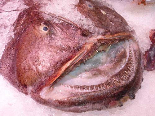 fish mouth fish fish market