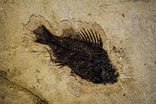fish-reprint fish in the sand track in the sand
