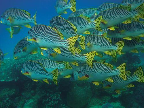 fish swarm fish underwater