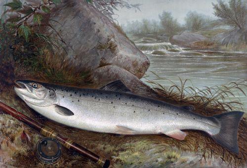 Fish Vintage Painting