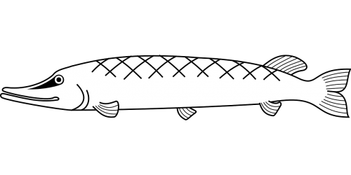 fishes marine life underwater