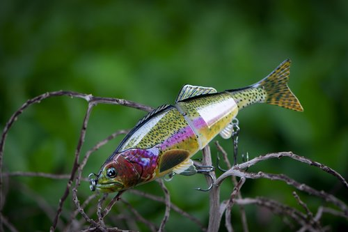 fishing  fishing lure  fish lure