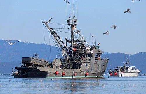 fishing  herring run  fishermen