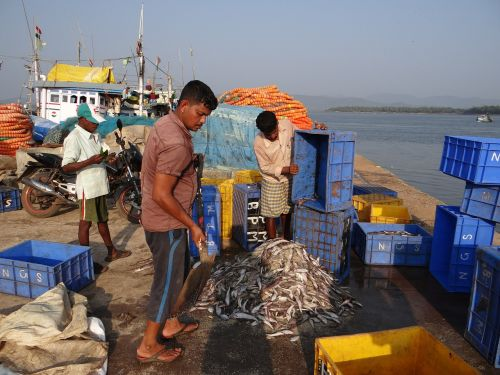 fishing harbour catch