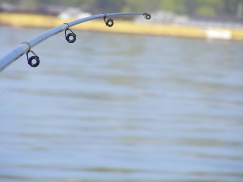 fishing rods ship danube