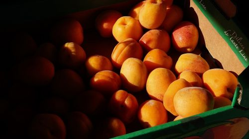 fit healthy apricots