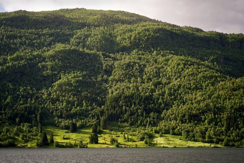 fjord  forest  nature