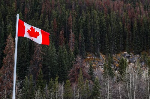 flag  forests  canada