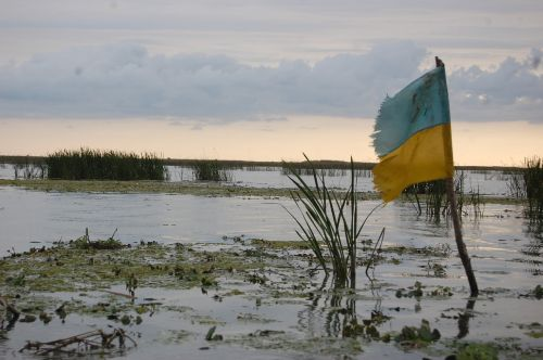 flag ukraine swamp