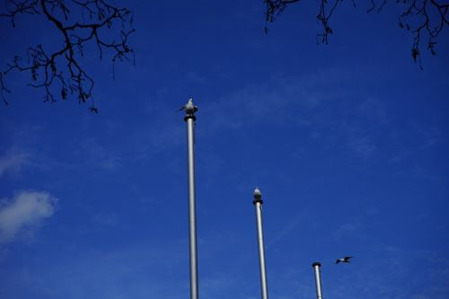 flag poles seagull animal