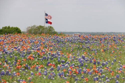 flags texas flag us flag