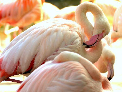 flamingo zoo pink flamingo