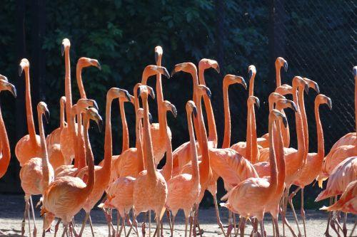 flamingo water wing