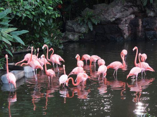flamingo water birds exotic birds