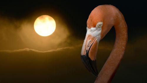 flamingo summer sun