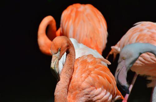 flamingo bird pink
