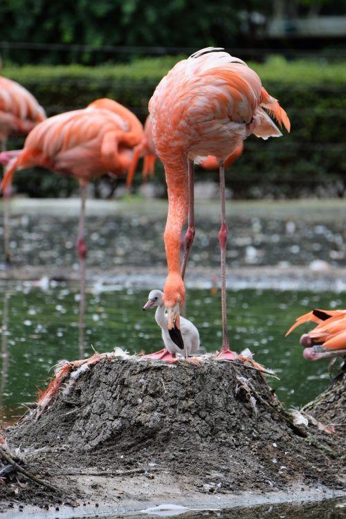 flamingo pink pink flamingo