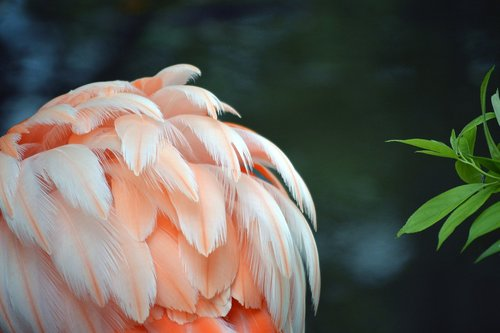 flamingo  feather  pink