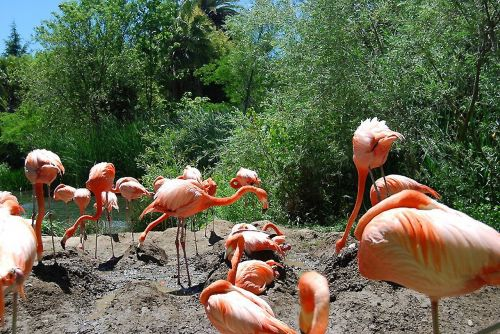 flamingo birds exotic