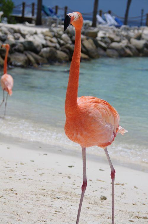 flamingo beach summer