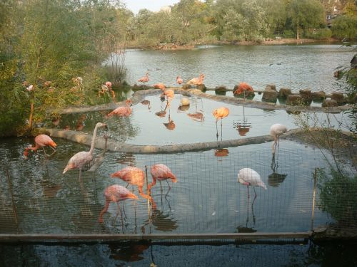 flamingo zoo pond