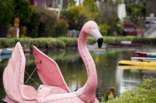 flamingo,flamingos,bird,birds,boat,boats,paddleboat,runabout,fiberglass,row,lake,canal,dock,docked,pink,venicebeach,theme,themeboat,california,flamingo boat