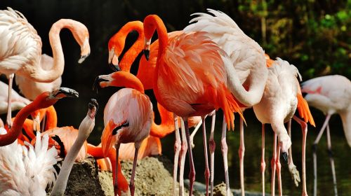 flamingos birds colorful