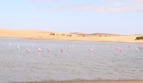 flamingos  walvisbay  namibia