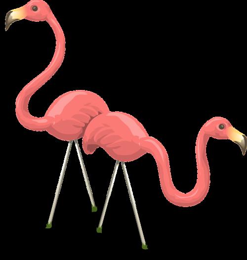 flamingos birds pink