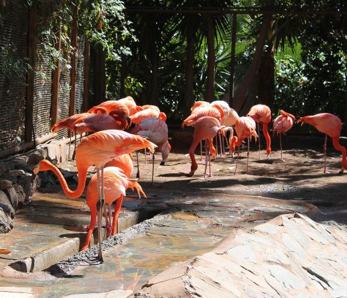 flamingos birds expensive